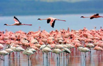 Amboseli wildlife Camping Tour
