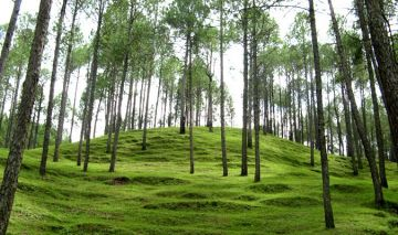Ranikhet Hill Tour