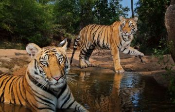 Short Escape to Bandhavgarh