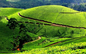 South India Spice Tour