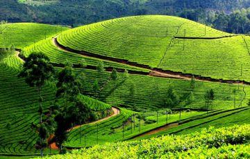 special Kerala Tours