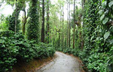 Special Mysore With Goa Tour