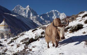Splendor Nepal Tour