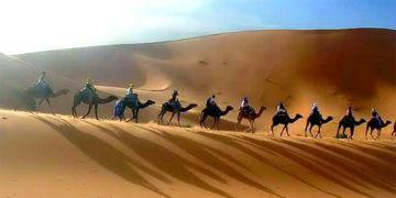 Taj Mahal With Camel Safari Tours
