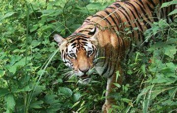 Taj Safari Tour in India