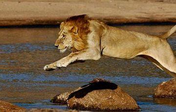 Tanzania Delight Safari
