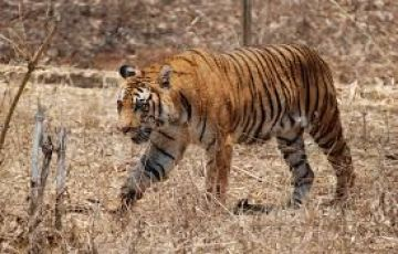 Temples, Tigers & Tribes of Central India
