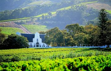 The Beauty of Cape and Winelands