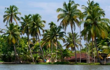 The Decent Kerala Backwaters Tour