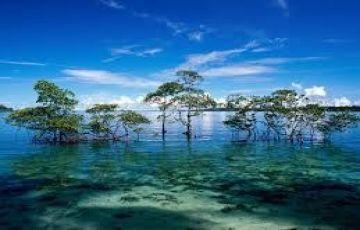 Trip To  Andaman Tour