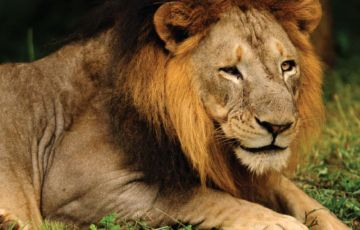 Ultimate safari in GIR FOREST