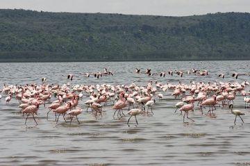 Wildlife Safari in Kenya