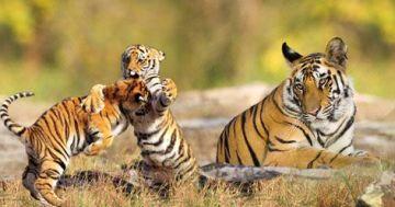 Wildlife Sanctuary Tour