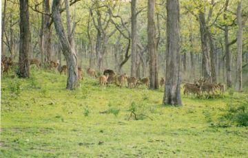 Beauty Bandipur National Park Tour