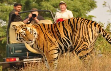 Wildlife Tour To North India Amazing Package