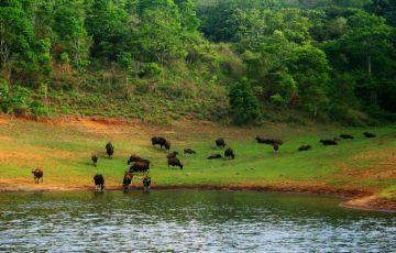 Best of Kerala, Ayurveda & Yoga retreay