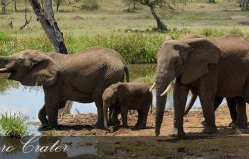 Breathtaking Holiday in Tanzania & Zanzibar Islands