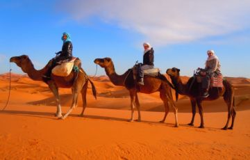 Camel Safari Tour