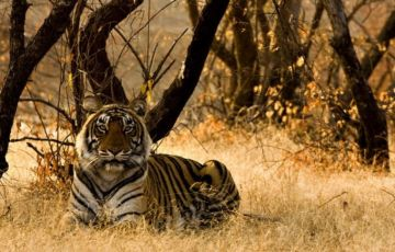 Central India Tiger and Tribal Tour