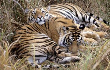 Chhattisgarh Wildlife Tour