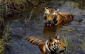 Complete India Wildlife Package