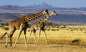 7 Days Kenya Safari