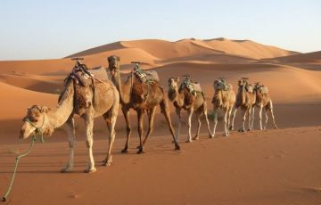 Great Incentive Rajasthan Tour