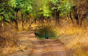 Enchanting Temple & Wildlife Tour