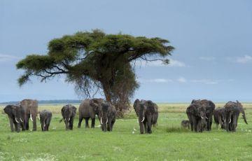 9-day Tanzania Tour