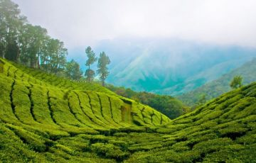 Exotic Kerala Holiday Tour