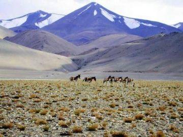 Exotic Ladakh