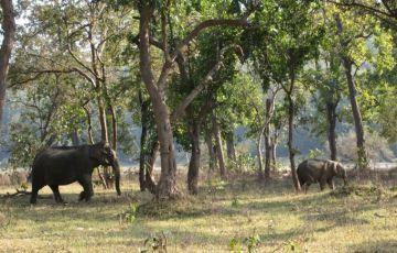 Forest Rajaji National Park Tour