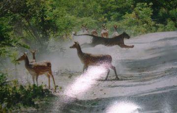 India Tour Of Wildlife