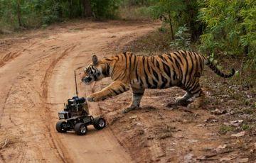 India Wildlife Safari Tour