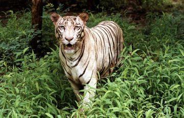 Indian Tiger Tour Package