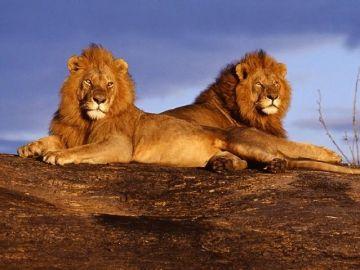 Kenya and Tanzania Wildlife Tour