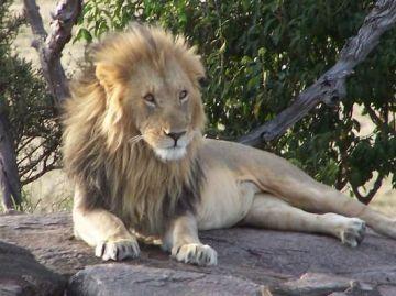 Kenya National Park And Samburu Game Reserve