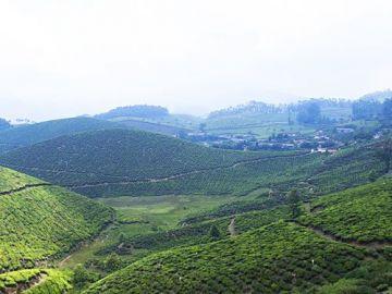 Kerala Hills Station and Mountain Tour