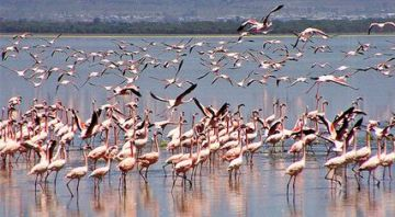 Lake Nakuru And Masai Mara Tour