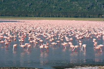 Masai Mara & Lake Nakuru National Park