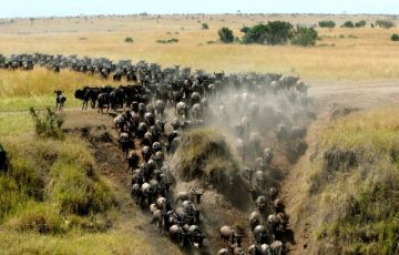 Masai Mara Three Days