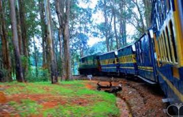Ooty Package 3 Night /4 Days