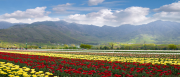 ROMANTIC SRINAGAR TOUR PACKAGE 3 NIGHTS AND 4 DAYS