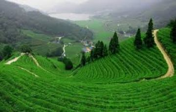 TPJ-70 Magical Athirapally with Munnar