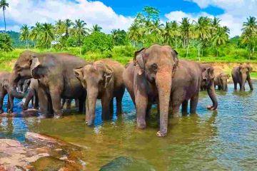Mesmerising Sri Lanka Tour  Duration 5 Nights / 6 Days