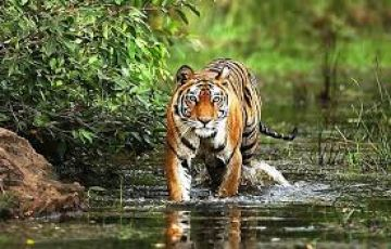 Holiday Golden Traingle With Tiger Tour 08 Nights & 09 D
