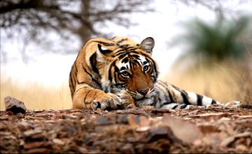 02 Days Ranthambore Tour Package