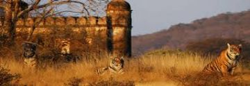 Jaipur And Ranthambore Tour 4N/5D