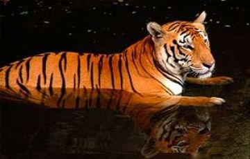 WILD SUNDERBAN TOUR PACKAGE 2 NIGHTS AND 3 DAYS