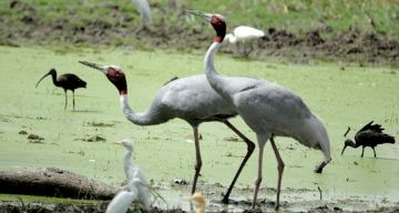 BHARATPUR WEEKEND TOUR PACKAGE 2 NIGHTS AND 3 DAYS